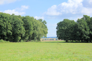 Dahlener Heide bei Kühnitzsch