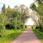 Radweg zwischen Meuchen und Lützen