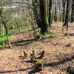 Wallburg Biesern, Reste des Walls