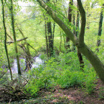 Wasserburg Cavertitz, Wassergraben