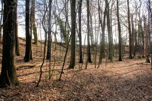 Döben, Zettenwall, nördlicher Wallabschnitt