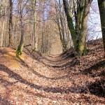 Döben, Zettenwall, östlicher Wallabschnitt mit Graben