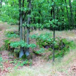 Burgberg Lastau, vermuteter alter Zugang