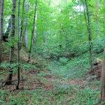 Streitwald, Turmhügelburg, innerer Graben