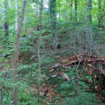Streitwald, Turmhügelburg, Burghügel