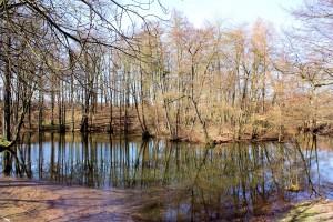 Wildenborn, Wasserburg