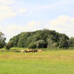 Am Rand der Dahlener Heide bei Falkenhain