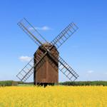 Windmühle in der Dahlener Heide
