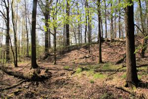 Fischheim, Burgwall Borstel