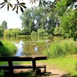 Teich in den ehemaligen Wallanlagen am Nordring